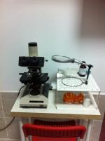Examene microscopice